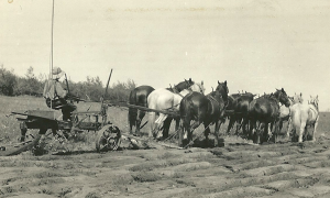 Breaking the virgin prairie 1927
